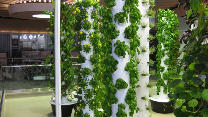 O Hare Airport Urban Garden Indoor Farming With Tower Farms