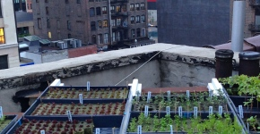 Rooftop farms